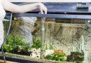 Akvaryum Suyu Nasıl ve Ne Sıklıkla Değiştirilir?