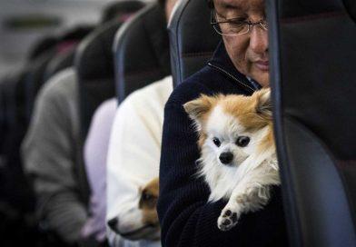 Uçakla Köpek Taşıma Şartları ve Bilgiler