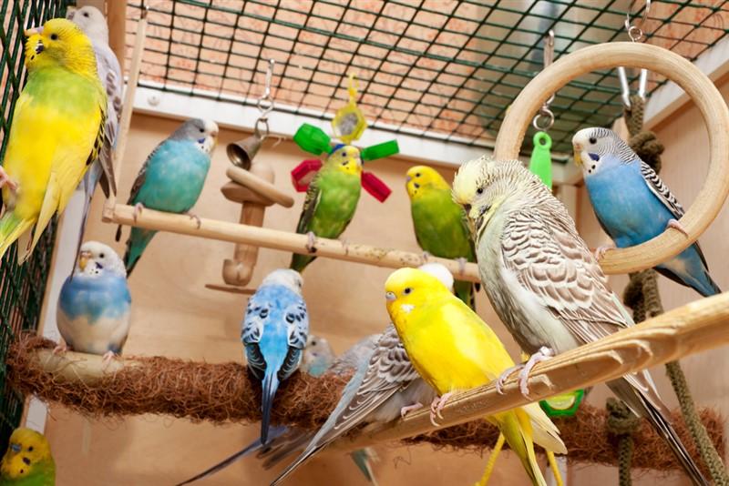 Muhabbet Kuşları İçin Zararlı Kafes Oyuncakları